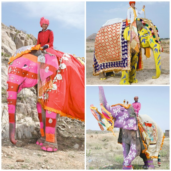 Decorated-Indian-Elephants-National-Geographic