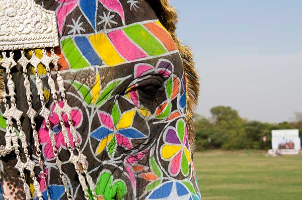 Decorated-Indian-Elephants-Side